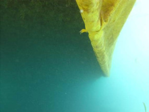 barrage-anti-algues-goeland-2